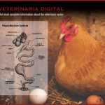Physiology of egg laying hens