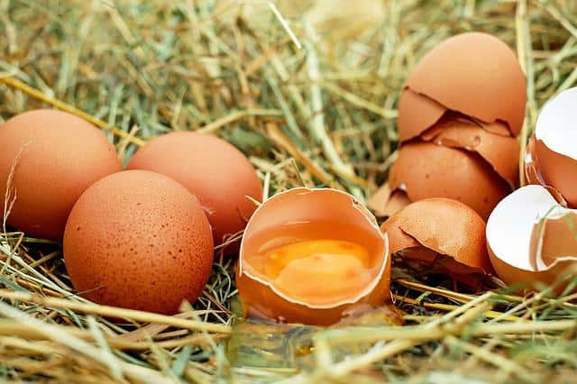 Dichotomous key to diagnose disorders of the eggshell