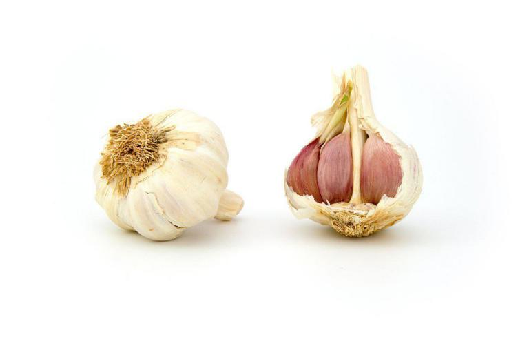 Natural plant extract in animal Feed: Garlic