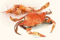 The exoskeleton of crustaceans is digested thanks to the enzyme chitinase