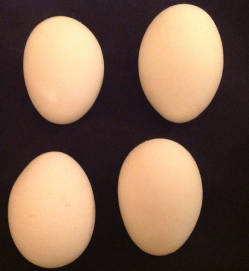 Deformed eggs tend to have irregular shapes and size