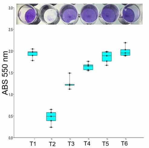 Absorbance of Vero cells cultures with the different treatments.