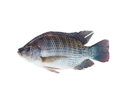 Response to the addition of immunostimulant pronutrients in the diet of Nile tilapia