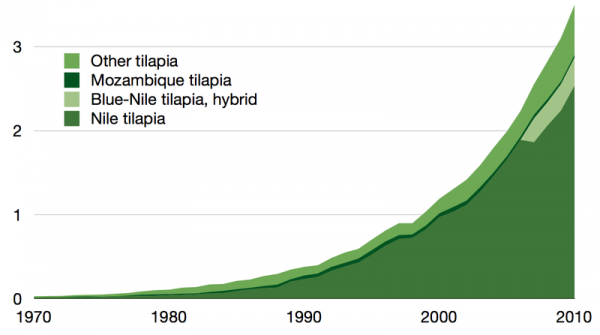 World production of different tilapia varieties