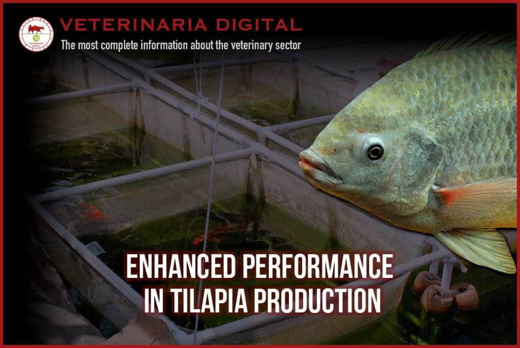 Enhanced performance in tilapia production by the inclusion of intestinal conditioner pronutrients in the diet