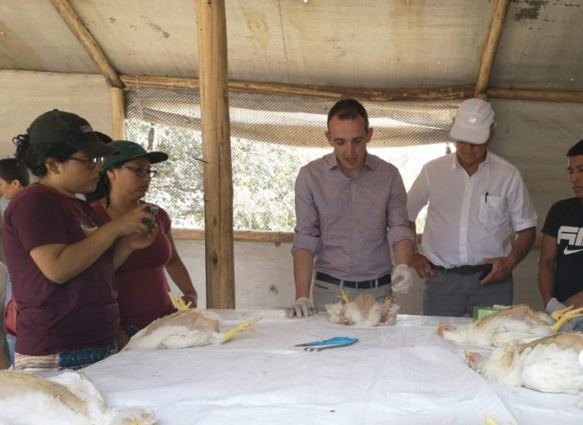 Biovet S.A. conducts technical training sessions in poultry companies of Peru