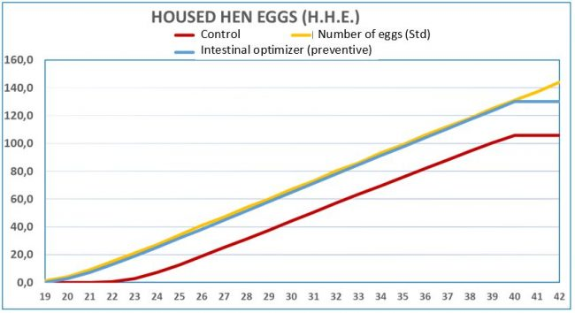 Number of eggs per bird housed in both study lots