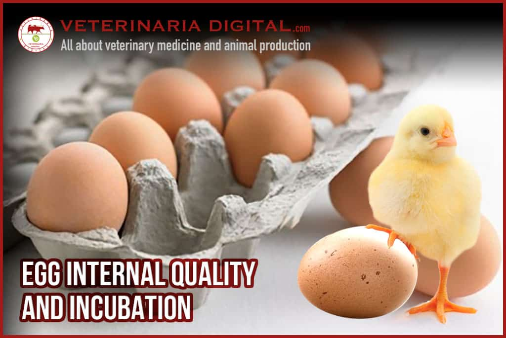 Factors that affect the egg internal quality and hatchability