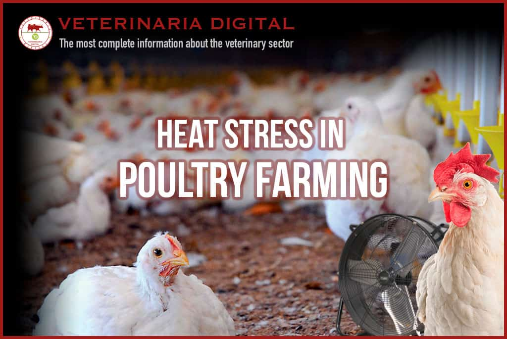 Heat stress in poultry farming