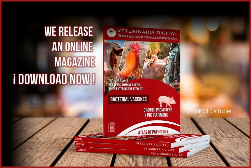 WE LAUNCH THE MAGAZINE IN PDF FORMAT!