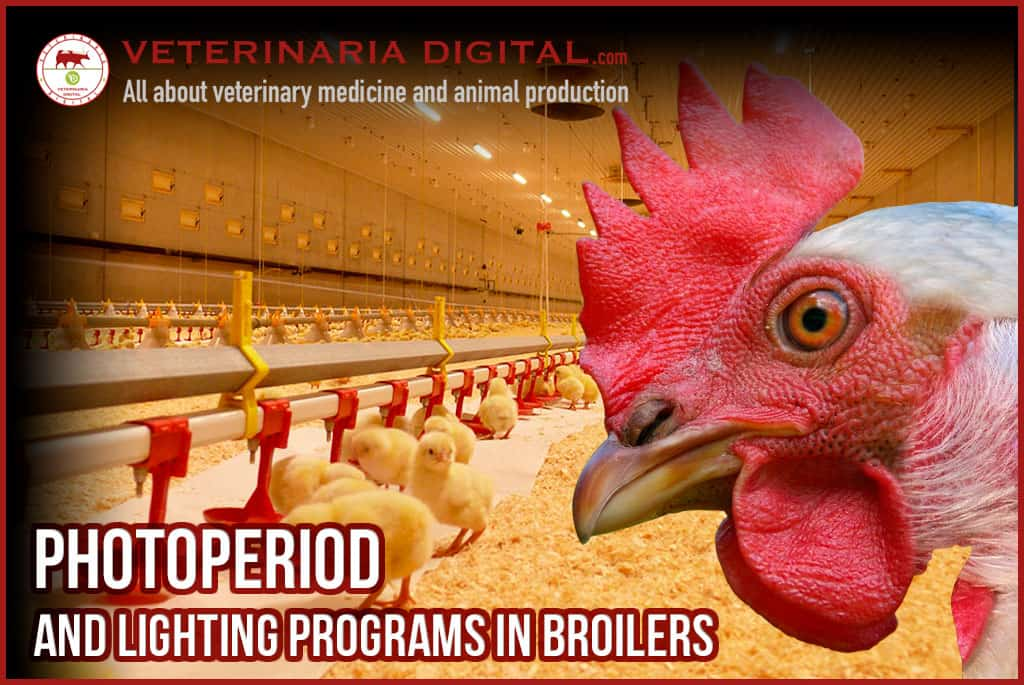 PHOTOPERIOD AND LIGHTING PROGRAMS IN BROILERS