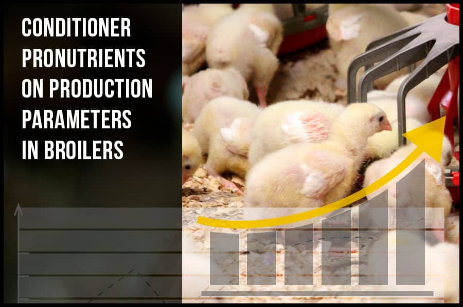 Evaluation of the effects of liver conditioner pronutrients on production parameters in broilers