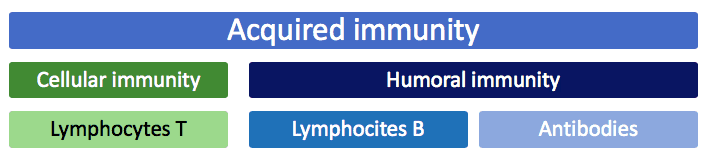 Acquired or specific immunity