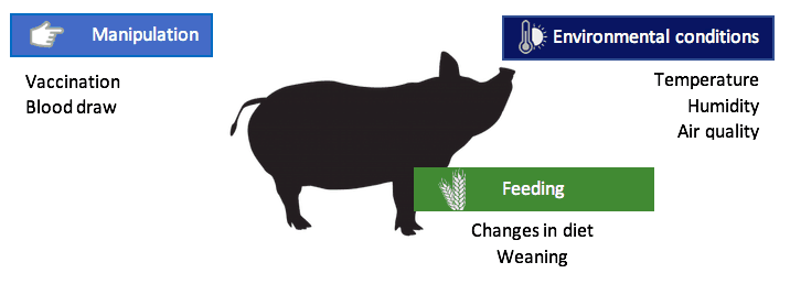 affecting the immune system of pigs