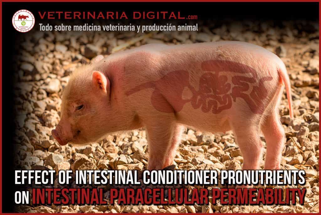 Effect of intestinal conditioner pronutrients on intestinal paracellular permeability