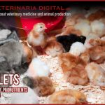 PULLETS: Addition of pronutrients in rearing