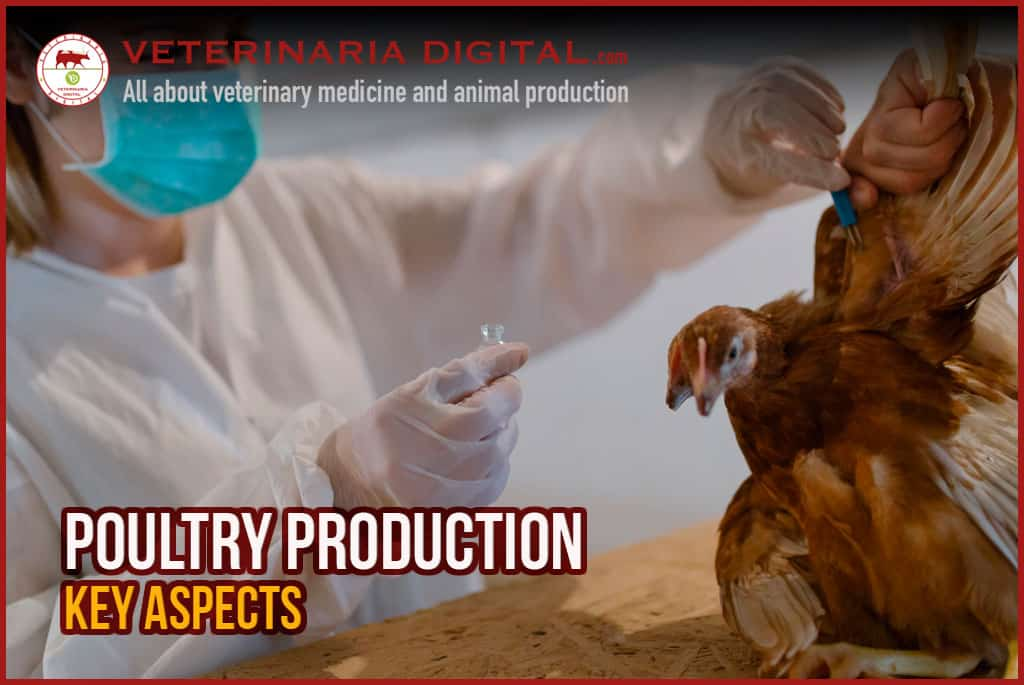 Key aspects in poultry production