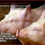 Mycotoxin contamination of raw materials used in the swine feed industry in latin america