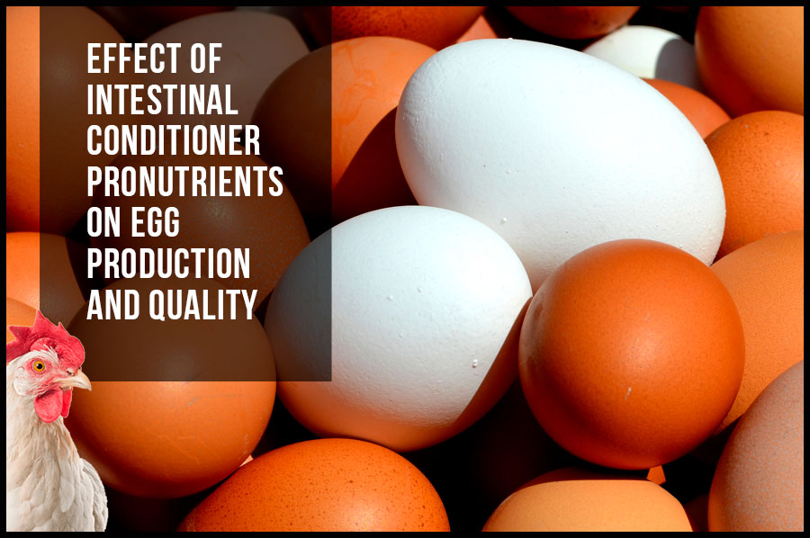 Effect of intestinal conditioner pronutrients on egg production and quality