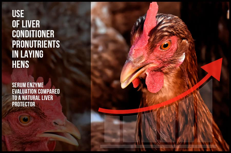Use of liver conditioner pronutrients in laying hens
