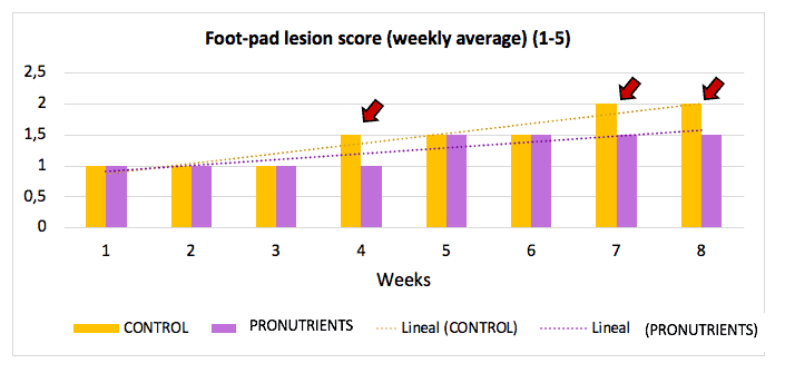 Evaluation of the degree of foot-pad lesion score in geese