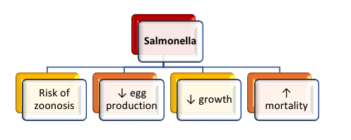 Salmonellosis in Africa