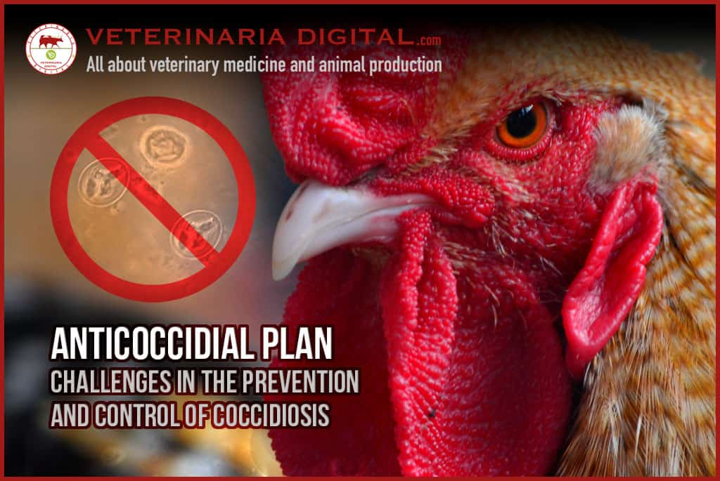 Anticoccidial plan: Challenges in the prevention and control of coccidiosis