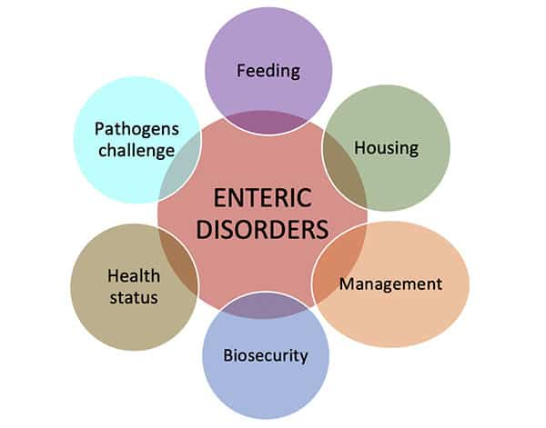 enteric disorders in poultry