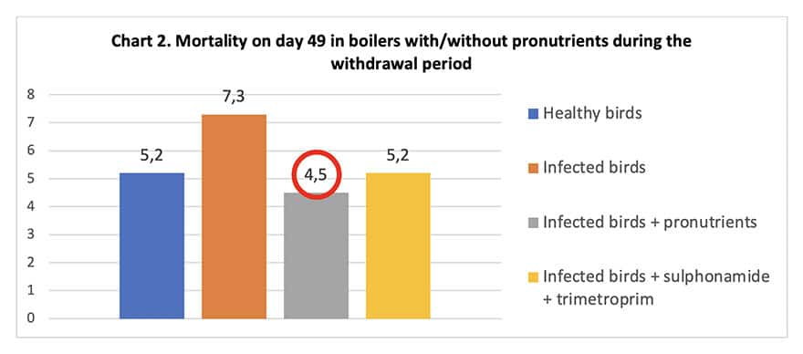 mortality in broilers