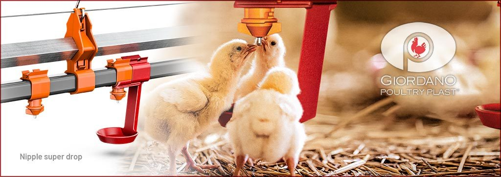 Chick feeder and drinker system -  Giordano Poultry Plast