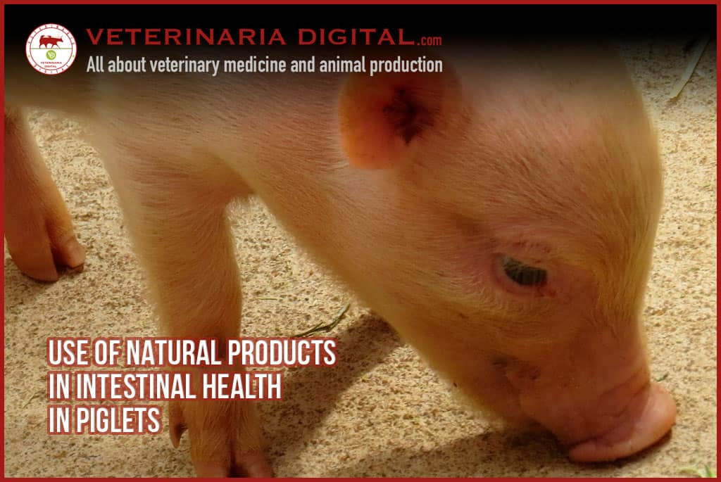 Use of natural products in intestinal health in piglets