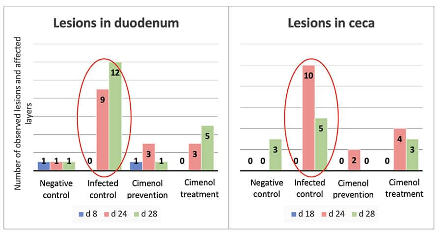 Lesions in duodenum