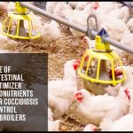 Use of intestinal optimizer pronutrients for coccidiosis control in broilers
