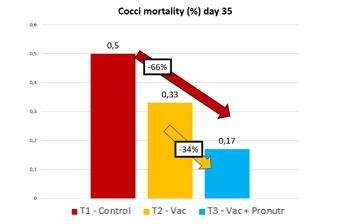 Mortality due to coccidiosis, comparison between the groups of the study a day 35 of the cycle.